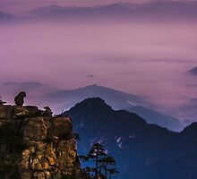 Monkey on hill by jasonksleung