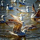 Seagulls at Southwold by Simon Duckworth