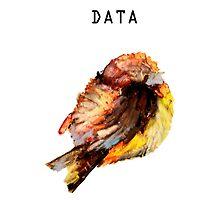 Data Classified by mariamanoura