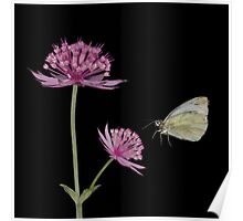 Pink flower & butterfly Poster