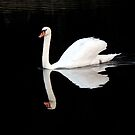 Swan Squared by Bob Hardy