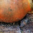 Foraging mouse by missmoneypenny