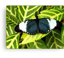 Why calling it an Insect ? Canvas Print