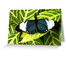 Why calling it an Insect ? Greeting Card