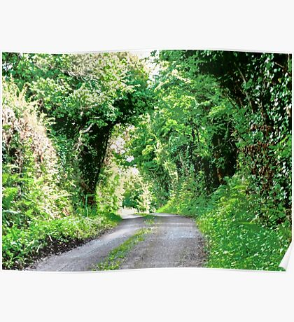 Leafy Lane - County Kerry, Republic of Ireland Poster