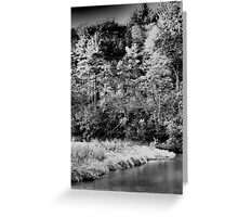 White Pines Forest State Park - Mt. Morris, IL  Greeting Card