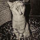 Kitty Yawns by Rob Hawkins