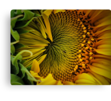 Close Contact Canvas Print