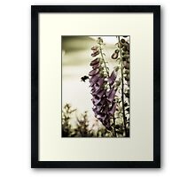 British Summertime Framed Print
