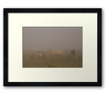 Foggy Cows Framed Print
