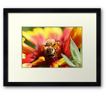 Honey Maker Framed Print