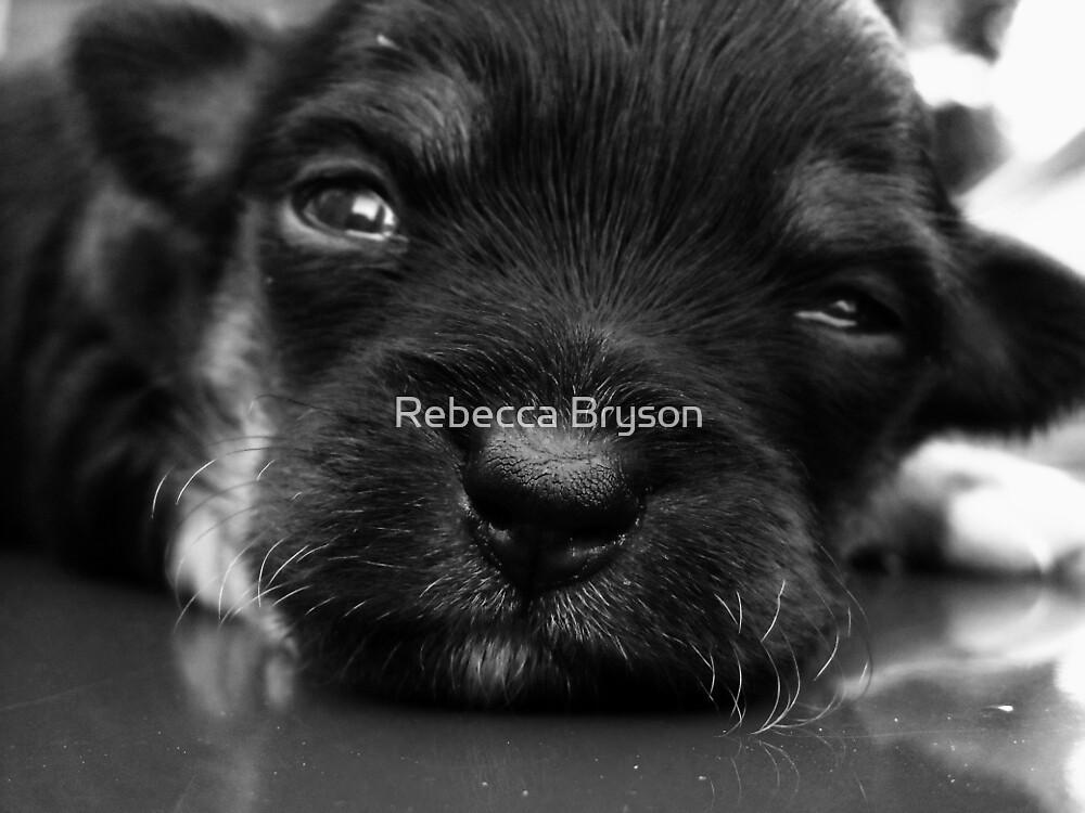 Baxter by Rebecca Bryson