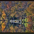 Autumn Reflections  by Sheryl Gerhard
