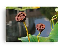 Sunbathing Seed Pods Canvas Print