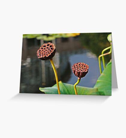 Sunbathing Seed Pods Greeting Card