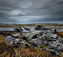 The Old Log by Charles & Patricia   Harkins ~ Picture Oregon