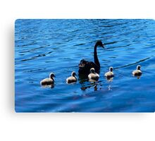 Black Swan and her babies Canvas Print