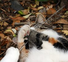 Playing in the leaf litter by GreyFeatherPhot
