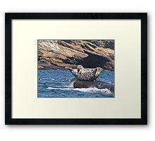 Grey Seals  Framed Print