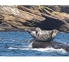 Grey Seals  Photographic Print