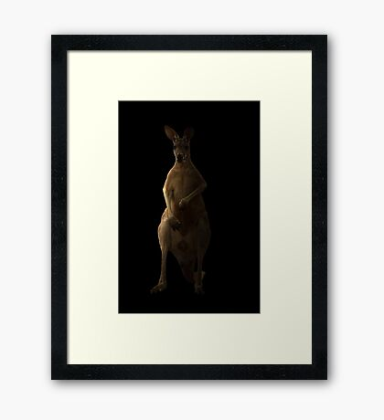 Kangaroo in the dark Framed Print