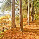 Autumn Arboreal Amble by brimel55