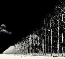 white trees by stelio