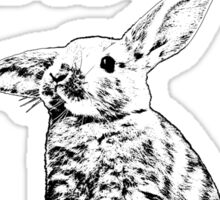 Bunny - Critter Love Collection 3 of 6 Sticker
