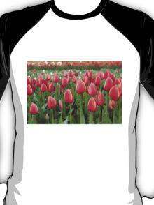 Tulips fields  T-Shirt