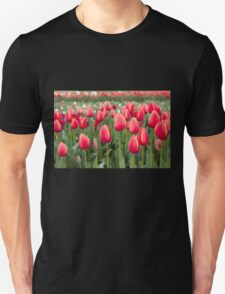 Tulips fields  T-Shirt