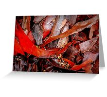 Tree Bark Series Abstract #7 Greeting Card