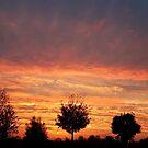 A Beautiful New Day by Jo Nijenhuis