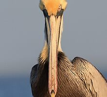 Pelican Attitude by William C. Gladish