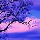 lonely tree by ANNABEL   S. ALENTON