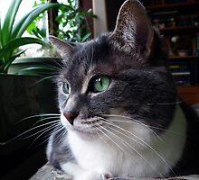 Cat  by BonnieToll