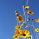 Desert flowers by Kathryn Steel