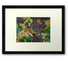 Leaf Detail 3 Framed Print