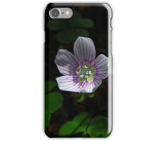 Oxalis In Algonquin iPhone Case/Skin