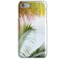Palms: Hilo, Hawai'i iPhone Case/Skin