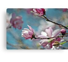 Sugar Magnolia Canvas Print