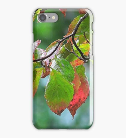 Dogwood in Early Autumn iPhone Case/Skin
