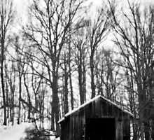 Forest Shed by BonnieToll