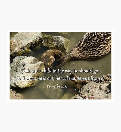 Ducklings Proverbs 22:6  Photographic Print