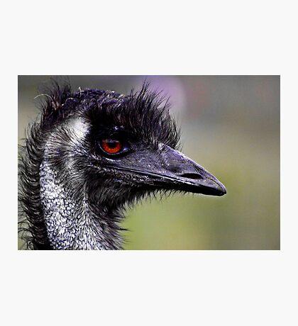 Old Man Emu Photographic Print