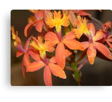 a brunch of the small orchids Canvas Print