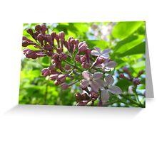 Looking Up At Lilac Greeting Card