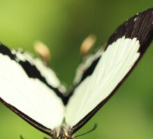 Butterfly - White and Black Sticker