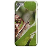 Tailed Jay Butterfly iPhone Case/Skin