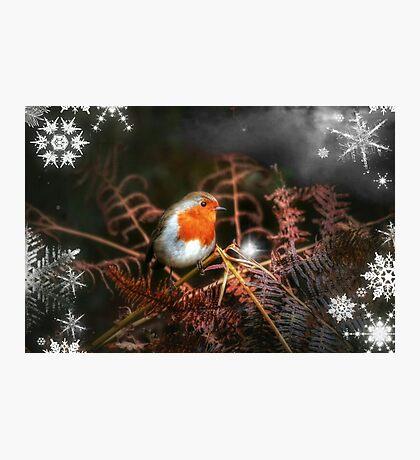 Star of Wonder Photographic Print