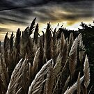 Pampas Sunset Drama by afinearticle